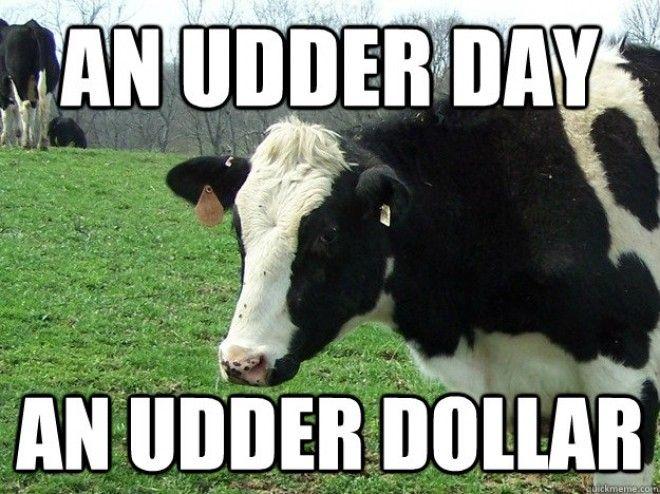Cow Meme Cows Funny Farm Humor Cow Quotes