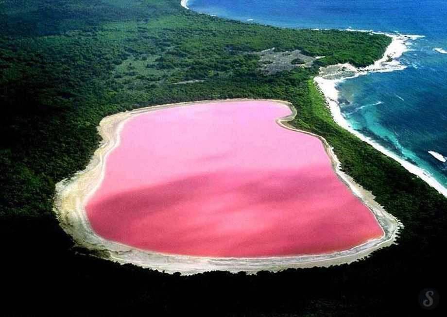 Le lac rose de Middle Island, US
