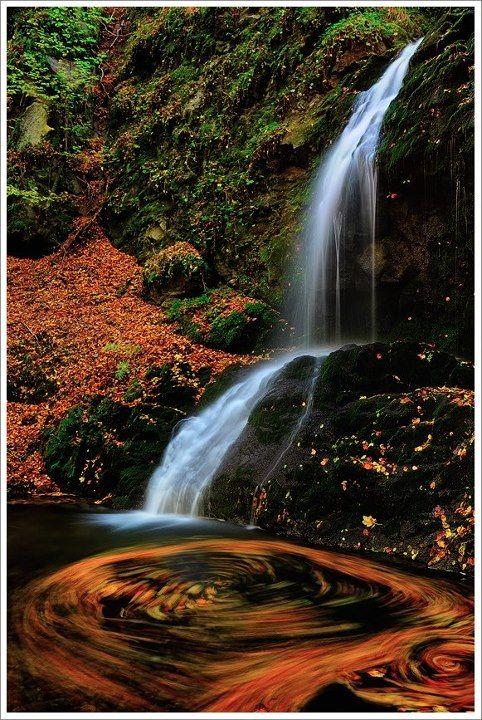 Frakto forest, drama, greece