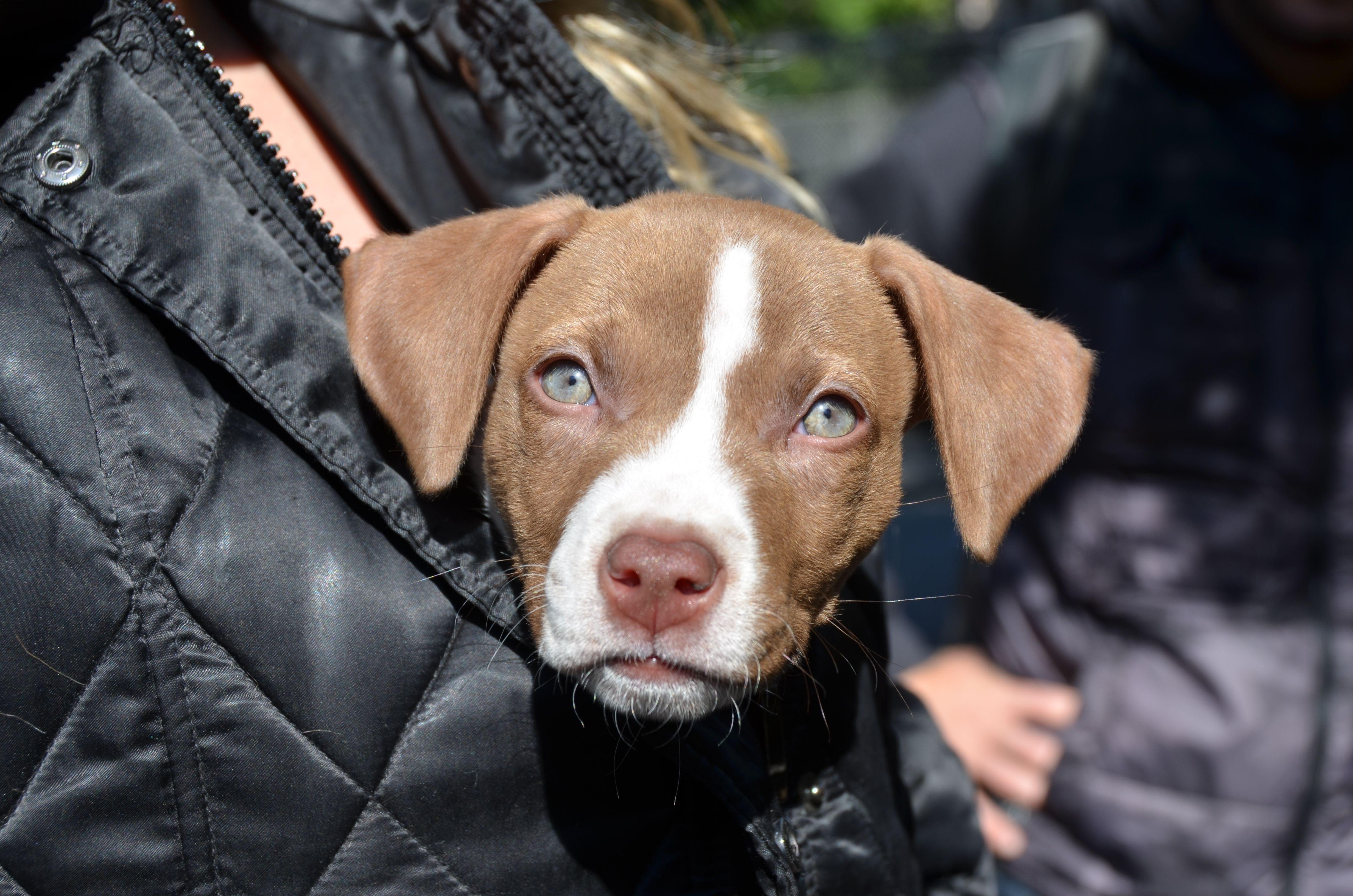 Broward Pet Adoption