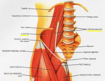 Lower Back And Hip Diagram - Block And Schematic Diagrams •