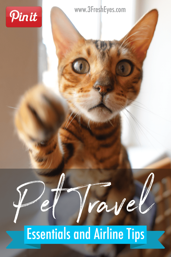 Pet Travel Essentials And Airplane Tips 3 Fresh Eyes Pet Travel Cat Travel Travel Essentials