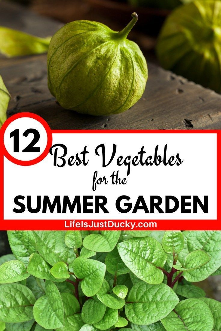 12 Best Hot Weather Vegetables To Grow In Your Garden  Life Is Just Ducky What are the best vegetables to grow in your hot weather summer garden I have 12 suggestions of...