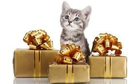 Enter to win a $250 Amazon Gift Card and a Cat item prize pack