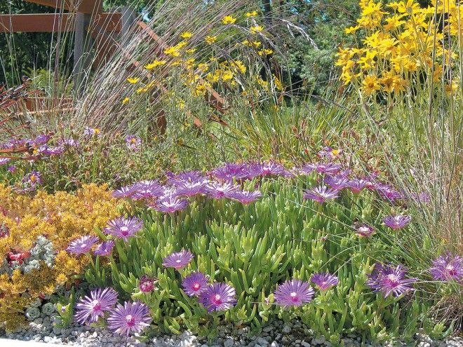 roof planting serene sun house | Extensive Green Roofs: Horticultural Considerations for ...