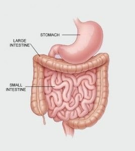 Nanojuice New Technique For Examining Small Intestine In 2020 Large Intestine Intestines Digestive System