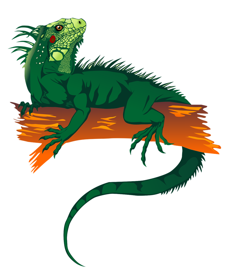 This Is Best Iguana Clipart Emmas Page Free Images For Your Project Or Presentation To Use Personal Commersial