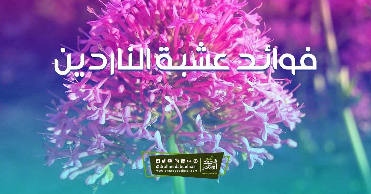 الدكتور احمد ابو النصر Neon Signs Calm Artwork Keep Calm Artwork
