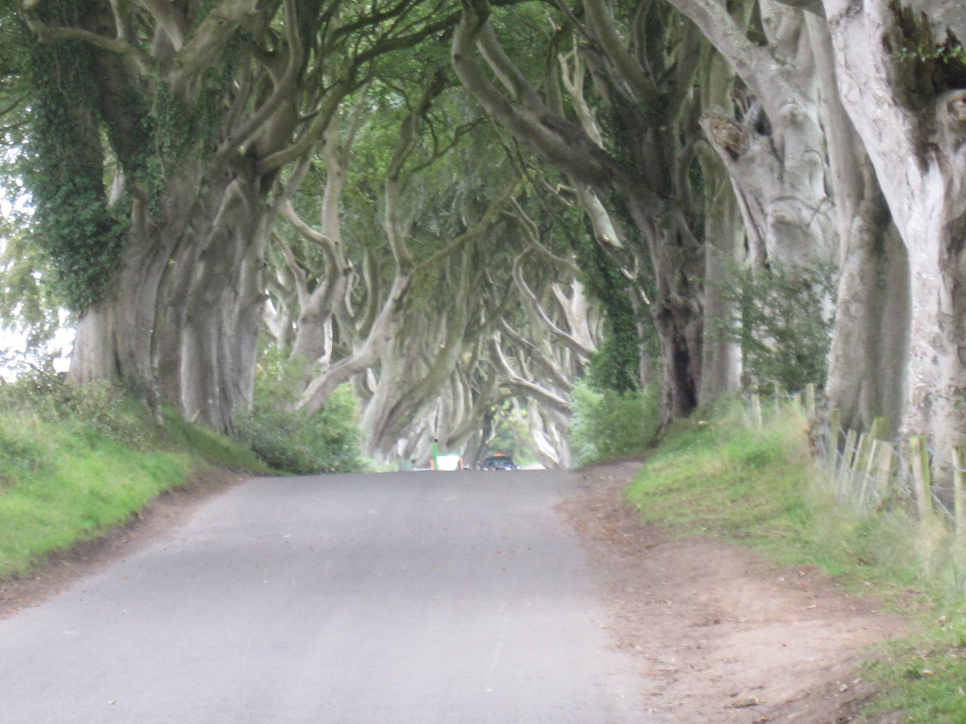 Dark hedges co antrim dark hedges hedges country roads