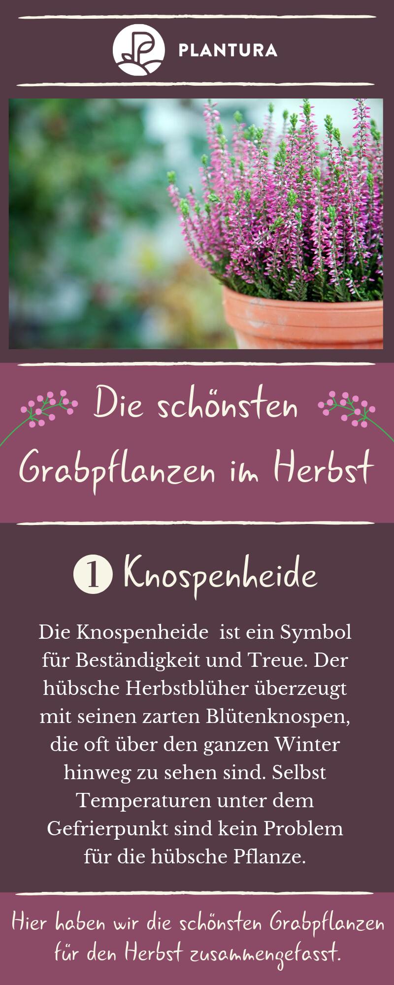 Grabbepflanzung im Herbst: Beispiele für eine schöne Herbstbepflanzung - Plantura