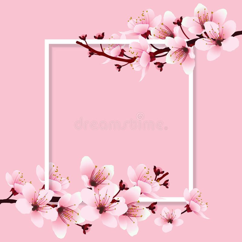Cherry Blossom Stock Illustration Cherry Blossom Background Cherry Blossom Watercolor Flower Drawing