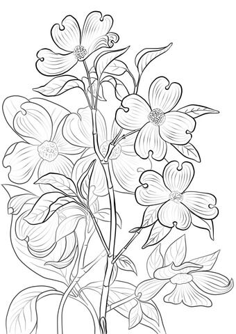 Flowering Dogwood Coloring Page Flag Coloring Pages Tree