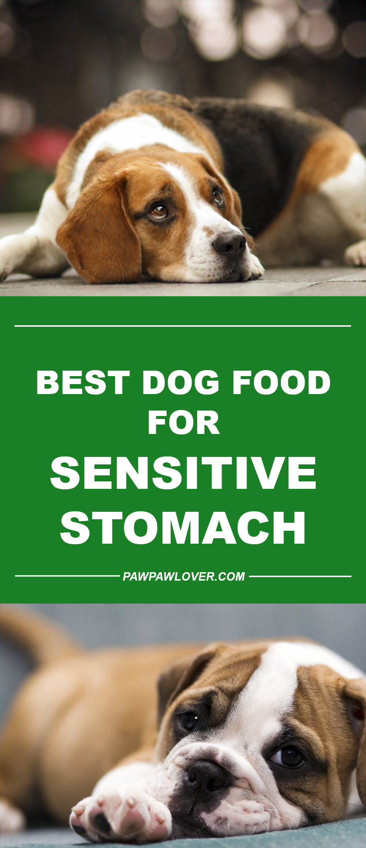 Best Dog Food For Sensitive Stomach & Diarrhea (Canned