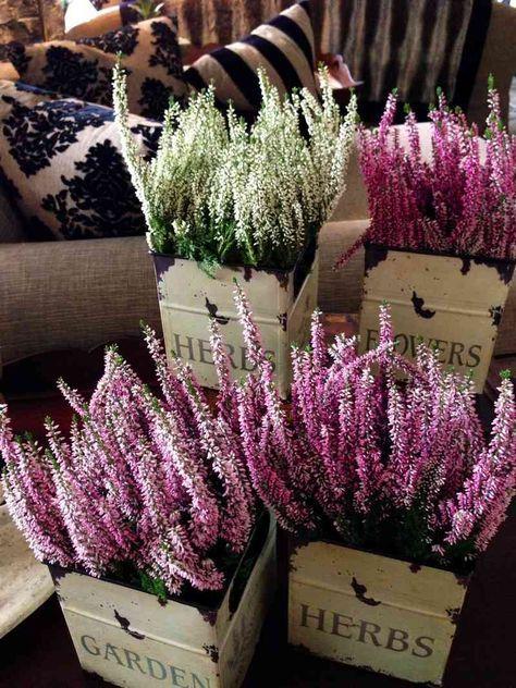 7 fleurs pour balcon qui l 39 gayeront au cours de l 39 hiver. Black Bedroom Furniture Sets. Home Design Ideas