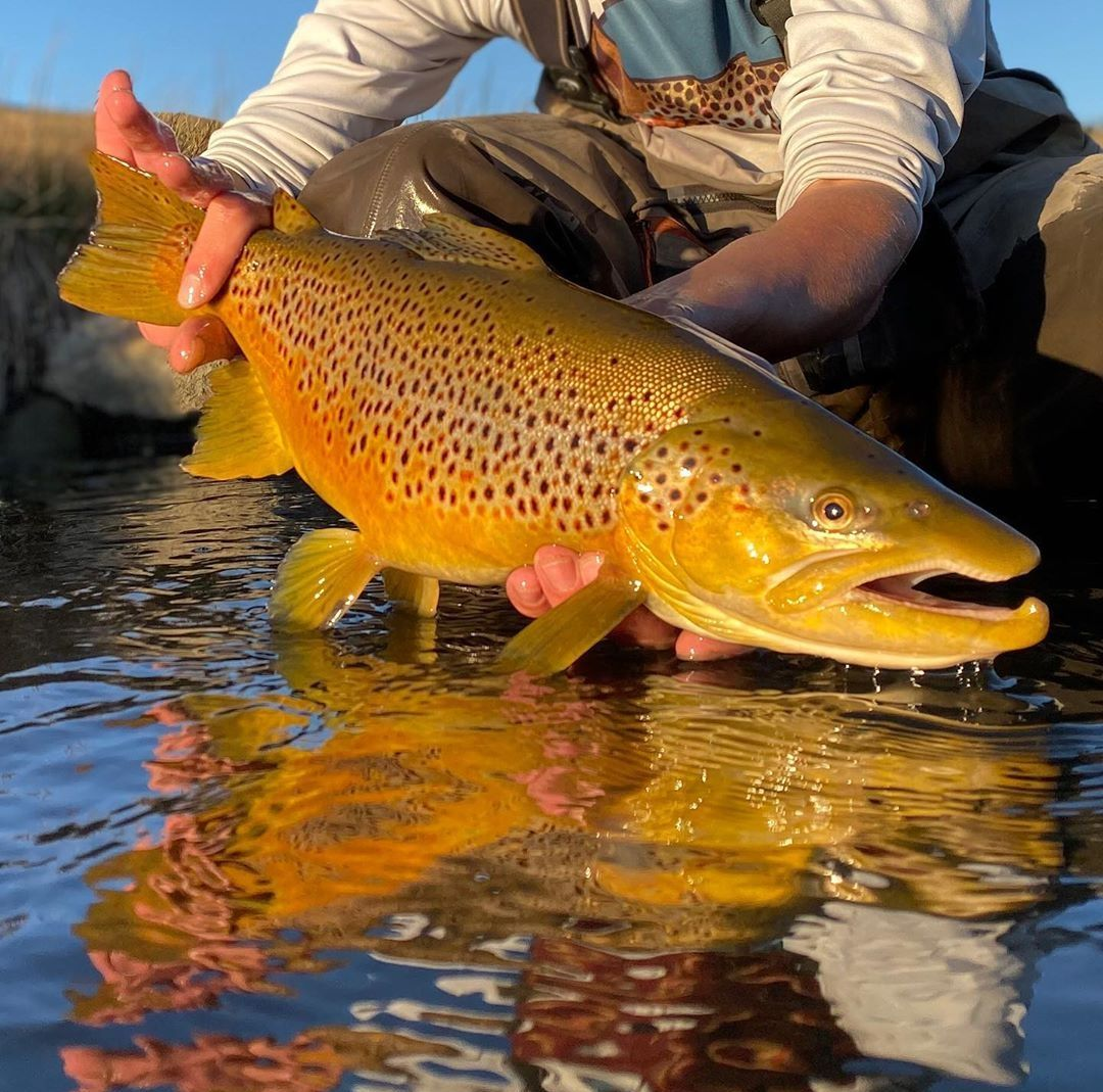Caught On A Blind Drift Fly Fishing Photography Fly Fishin Fly Fishing
