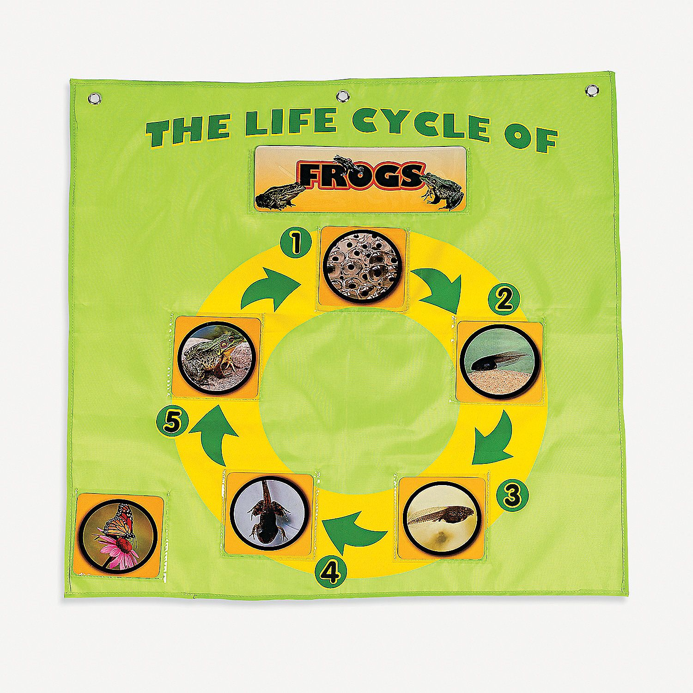 Life Cycle Pocket Chart