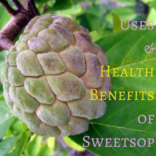 Uses and Health Benefits of Sweetsop or Sugar Apple Fruit