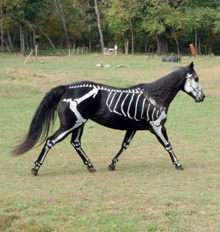 Skeleton Horse For Halloween