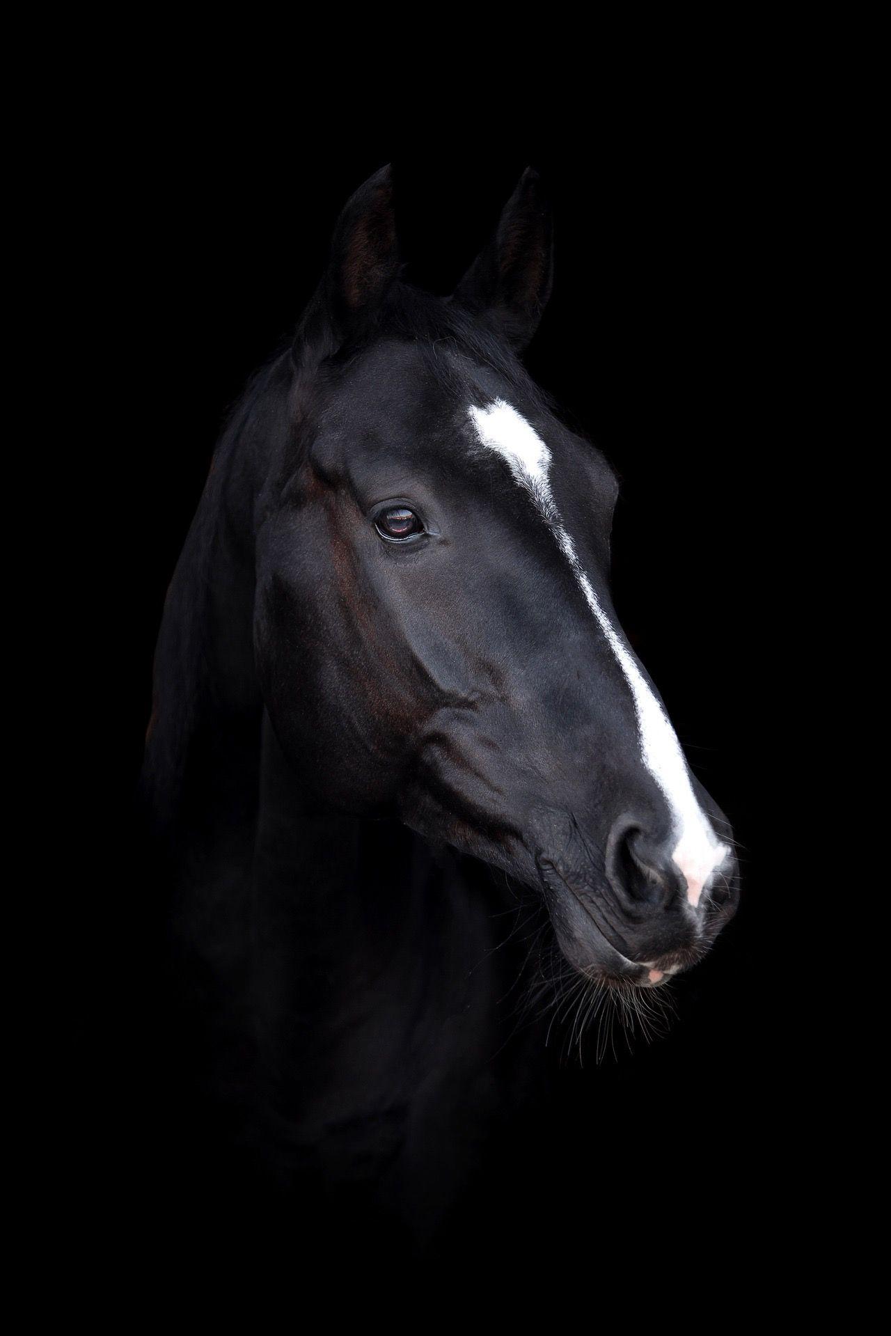 Pin De Ridha Riahi Em Mystere Riri Cavalos Bonitos Cavalos Inspirador