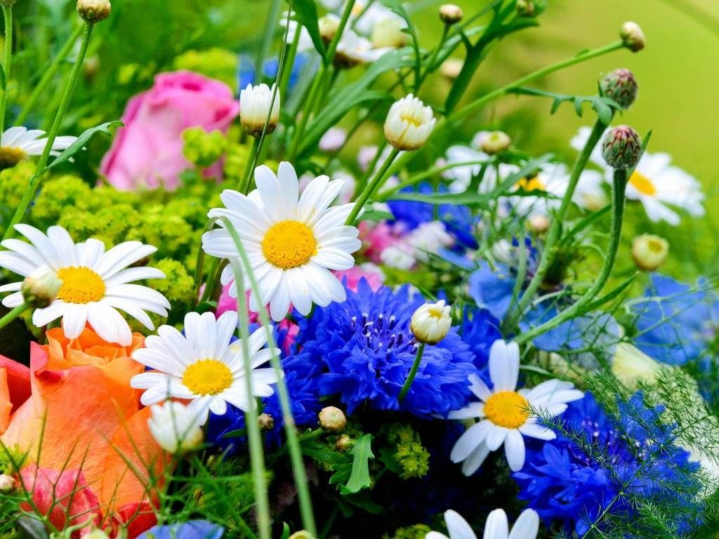 Beautiful Flowers Wallpapers Beautiful By Free Download Best Hd