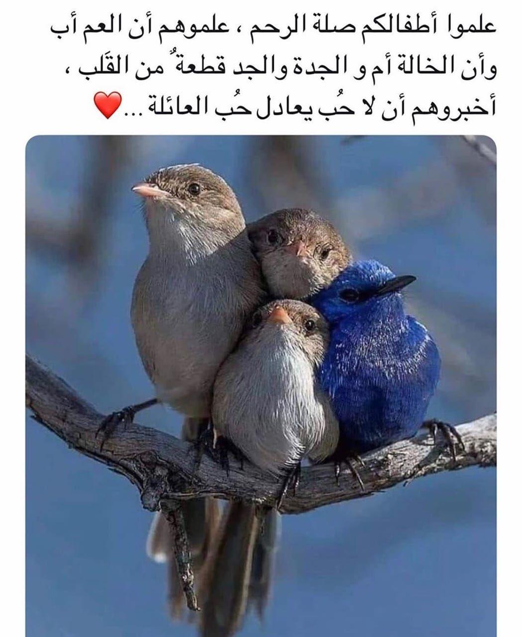 Image Decouverte Par Mouna Dramaqueen Decouvrez Et Enregistrez Vos Images Et Videos Sur We Heart It Beautiful Arabic Words Arabic Love Quotes Words Quotes