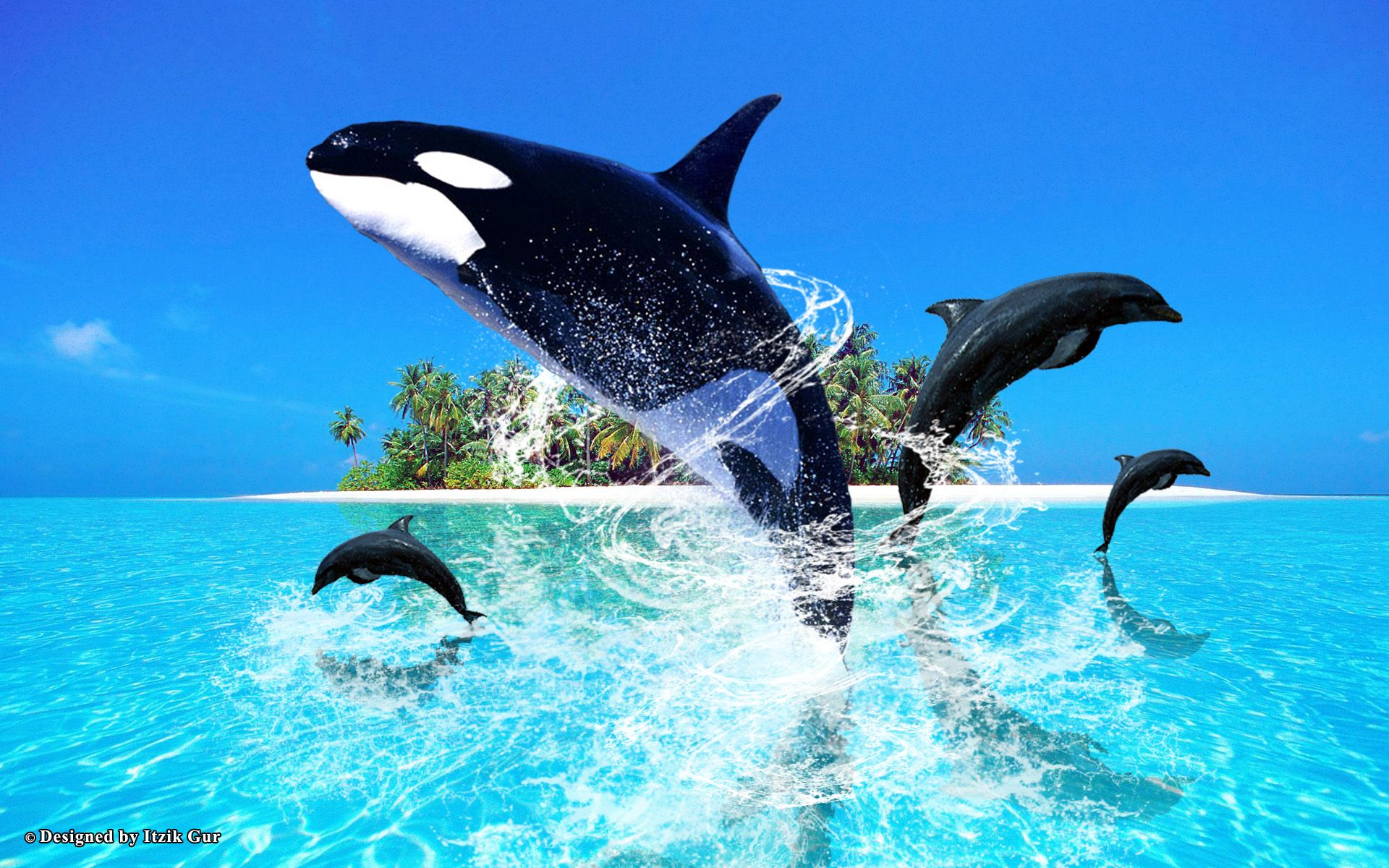 Dolphins Jumping Out Of Water Picture HD Wallpaper