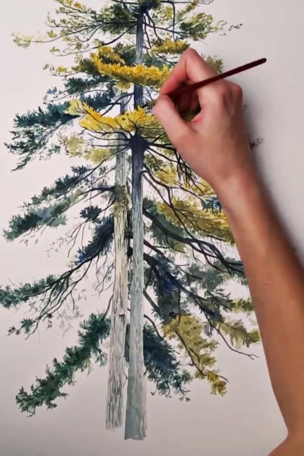 Pair of Pine Trees - the painting process | I create watercolor art to help people who love the outdoors connect with nature in their own home. My art serves as a reminder of the joy and excitement that comes from spending time outside | View this original work on my website today and don't miss out on the opportunity to bring this one of a kind piece into your home. I create my work from time spent outdoors, experiencing nature. You'll feel that connection to the outdoors through this painting.