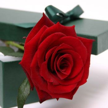 love-in-a-box-single-rose-valentines-same-day-delivery-flowers, Ideas