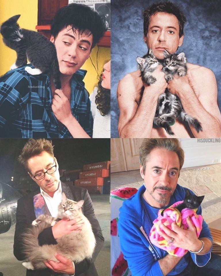 Cutest cats ever в 2020 г | Роберт дауни младший ...