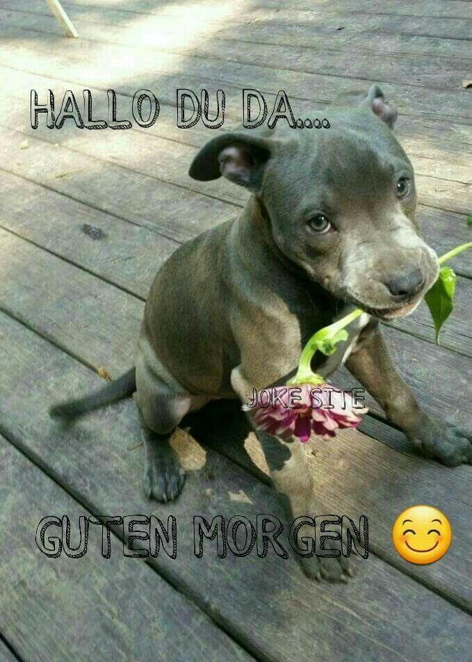 Notitle Christine Hertel Guten Morgen Guten Morgen Lustig Hund Funnies