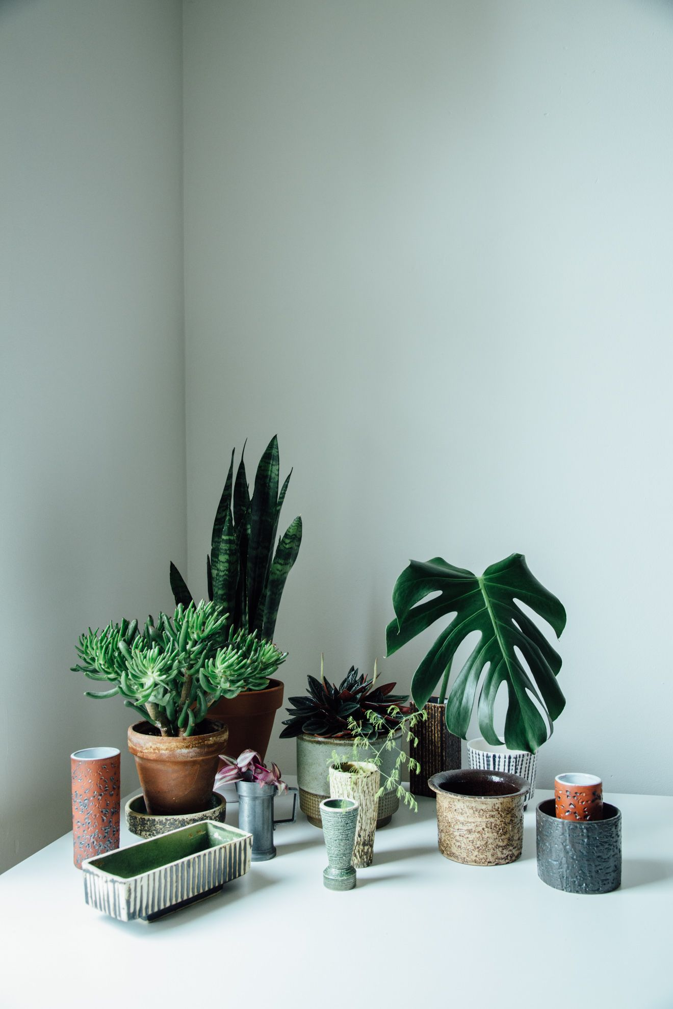 Plante D'intérieur Botanic Urban Jungle Bloggers My Plant Gang By Botanic Stilllife Indoor
