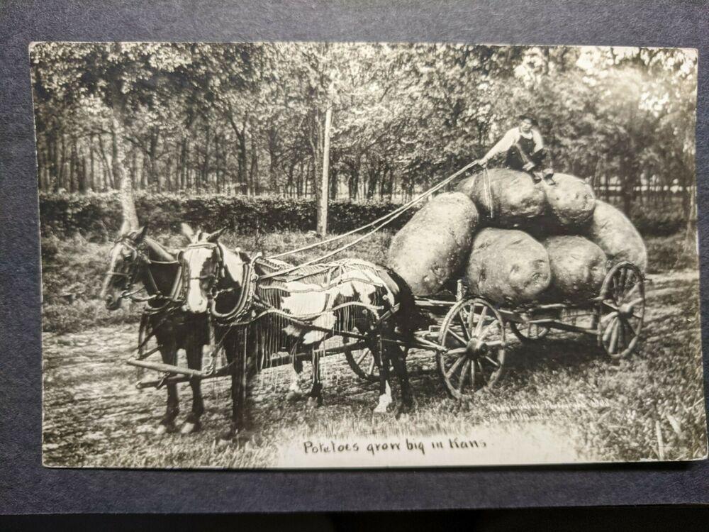 FUNNY HUGE POTATOES, WICHITA, KANSAS 1912 Postal History