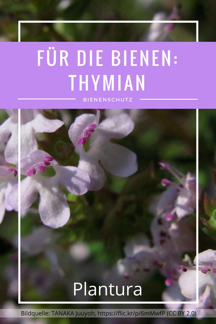 Bienenfreundliche Pflanzen Top 10 Plantura Bienenfreundliche Pflanzen Stauden Pflanzen Pflanzen