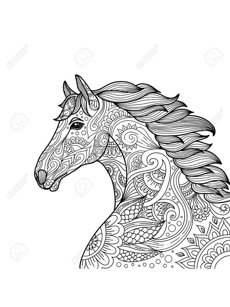 Horse Anatomy Coloring Pages Below Is A Collection Of Best Horse Coloring Page Which You Can Downloa Horse Coloring Pages Animal Coloring Pages Horse Coloring