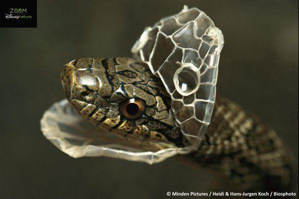 Disneynature On Twitter Haustier Schlange Schlangen Haustier