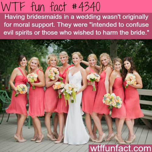 WTF Facts : funny, interesting & weird facts | facts ... - photo#47