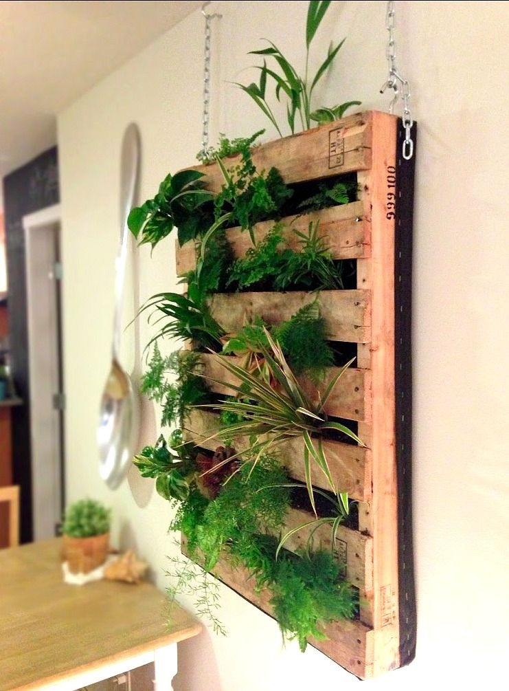 Pallet Wall Planter Spotted At Lululemon Athletica Des Moines