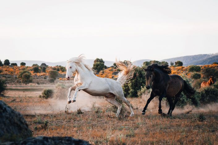 Fotos Pferde In Der Natur I 2020 Pferde Pferde