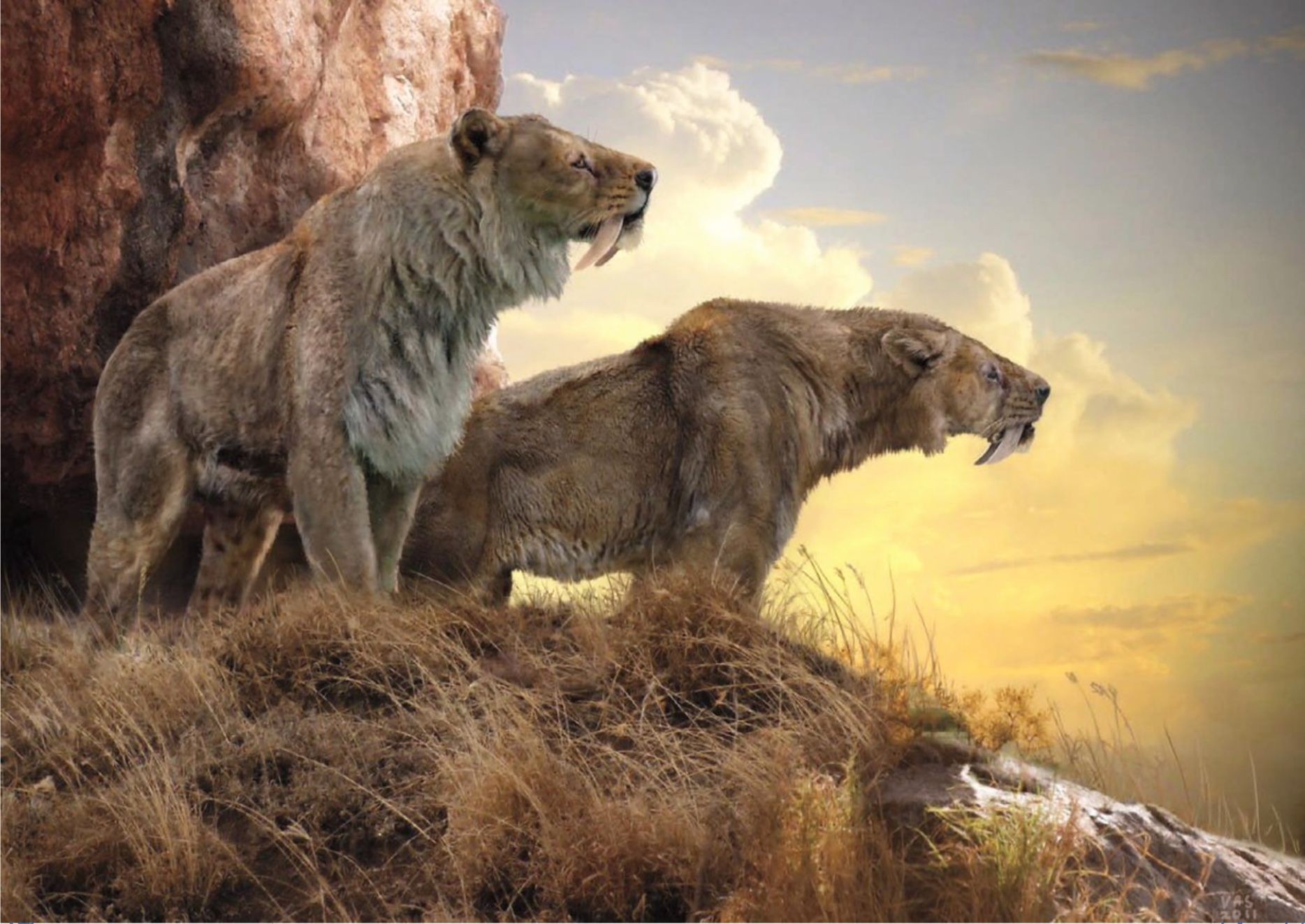 a pair of prehistoric smilodon populators surveying their