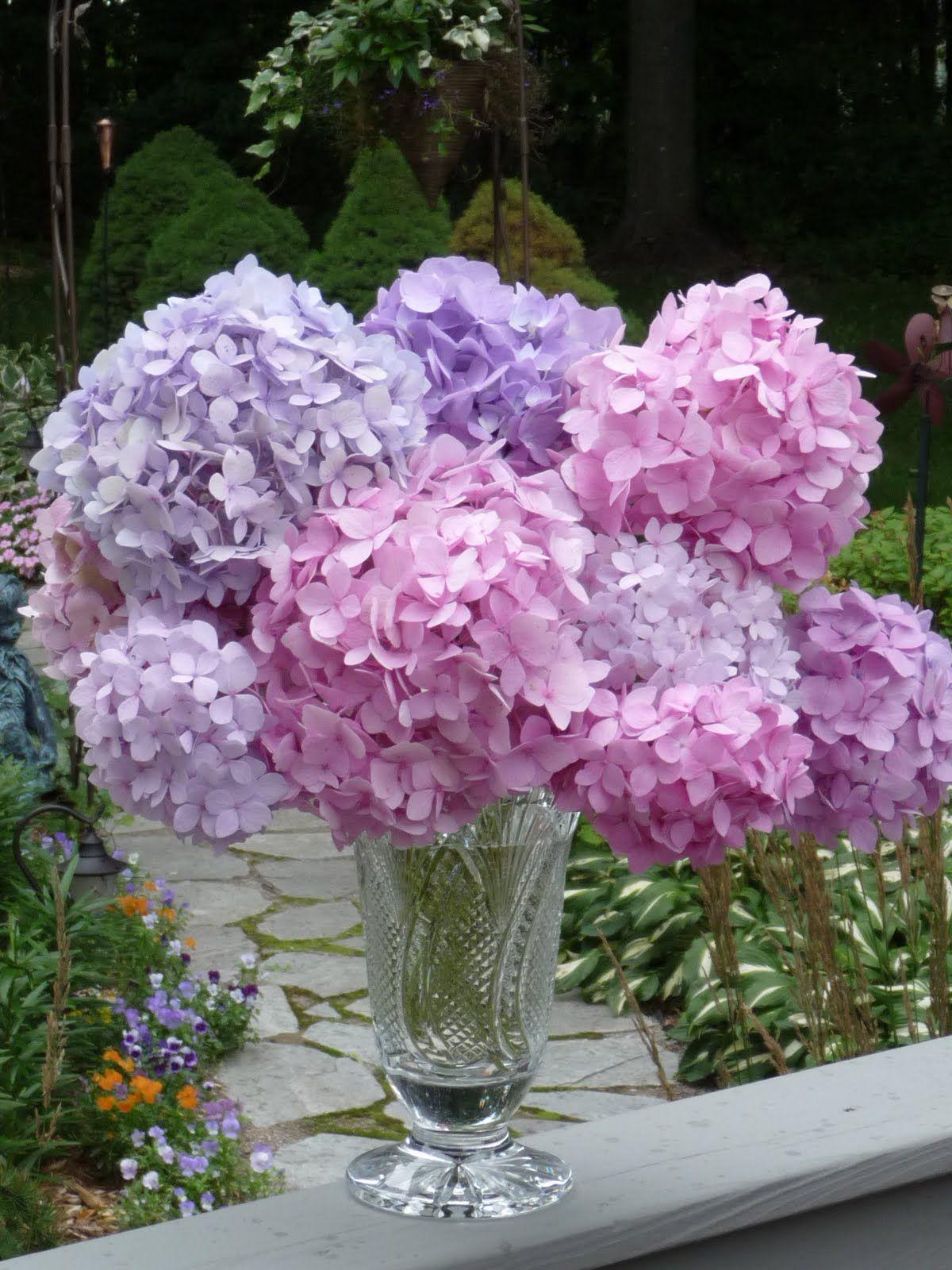 Sit With Me In My Garden Hydrangea Dreams Beautiful Hydrangeas Hydrangea Beautiful Flowers