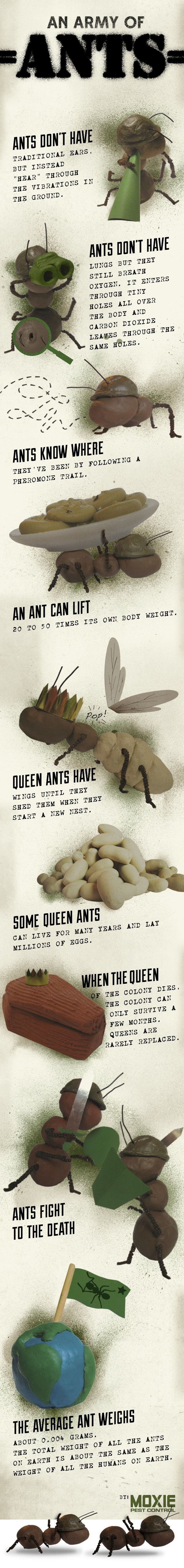 Natural remedies to get rid of ants and spiders earthday home natural remedies to get rid of ants and spiders earthday ccuart Choice Image