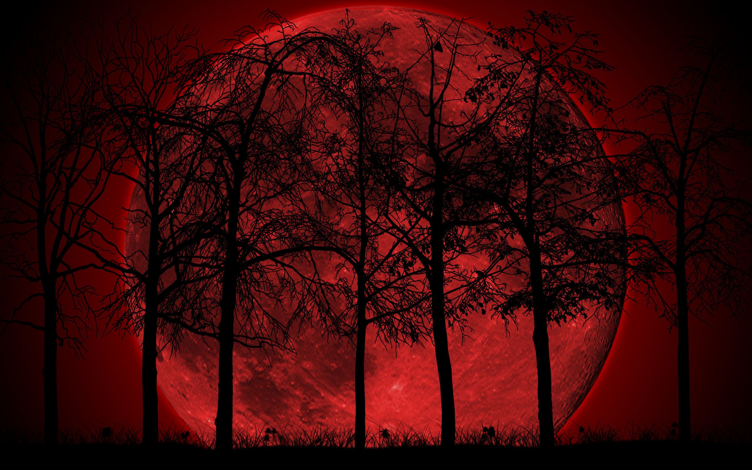 2987 Dark Forest Moon Free Wallpaper Walops Com Leafpool In