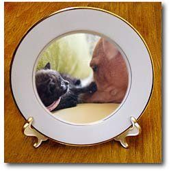 1 month old black kitten playing with a dog - 8 Inch Porcelain Plate