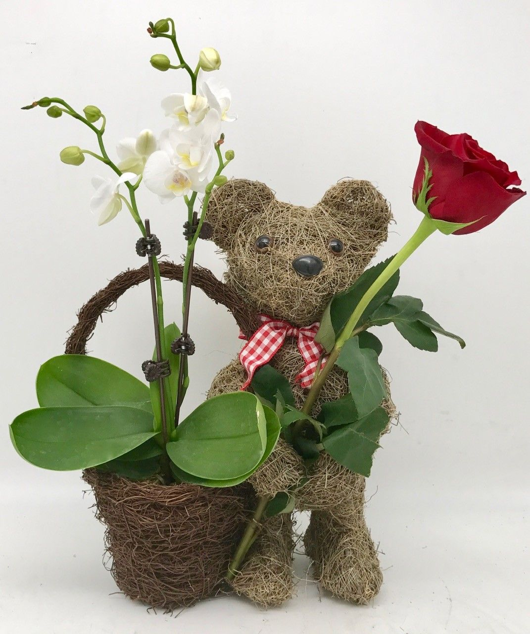 A Mini Orchid & a Rose in a Teddy Bear basket! by Wowsome
