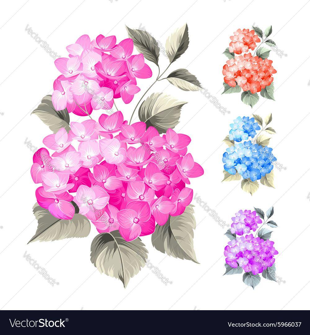 Purple flower hydrangea vector image on Hydrangeas art