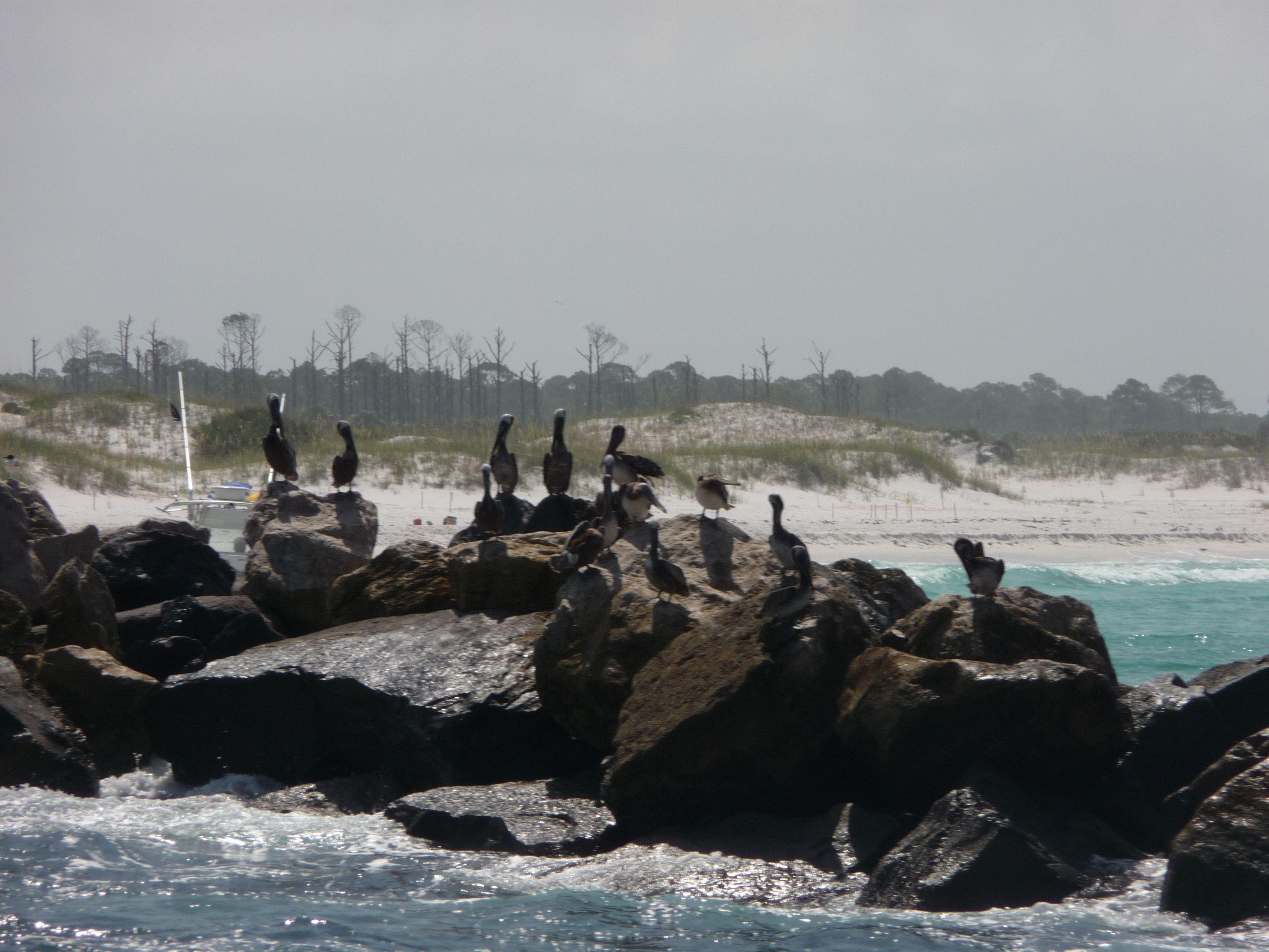 Off the coast of Panama City Beach, FL  photo by Jennifer Kirby