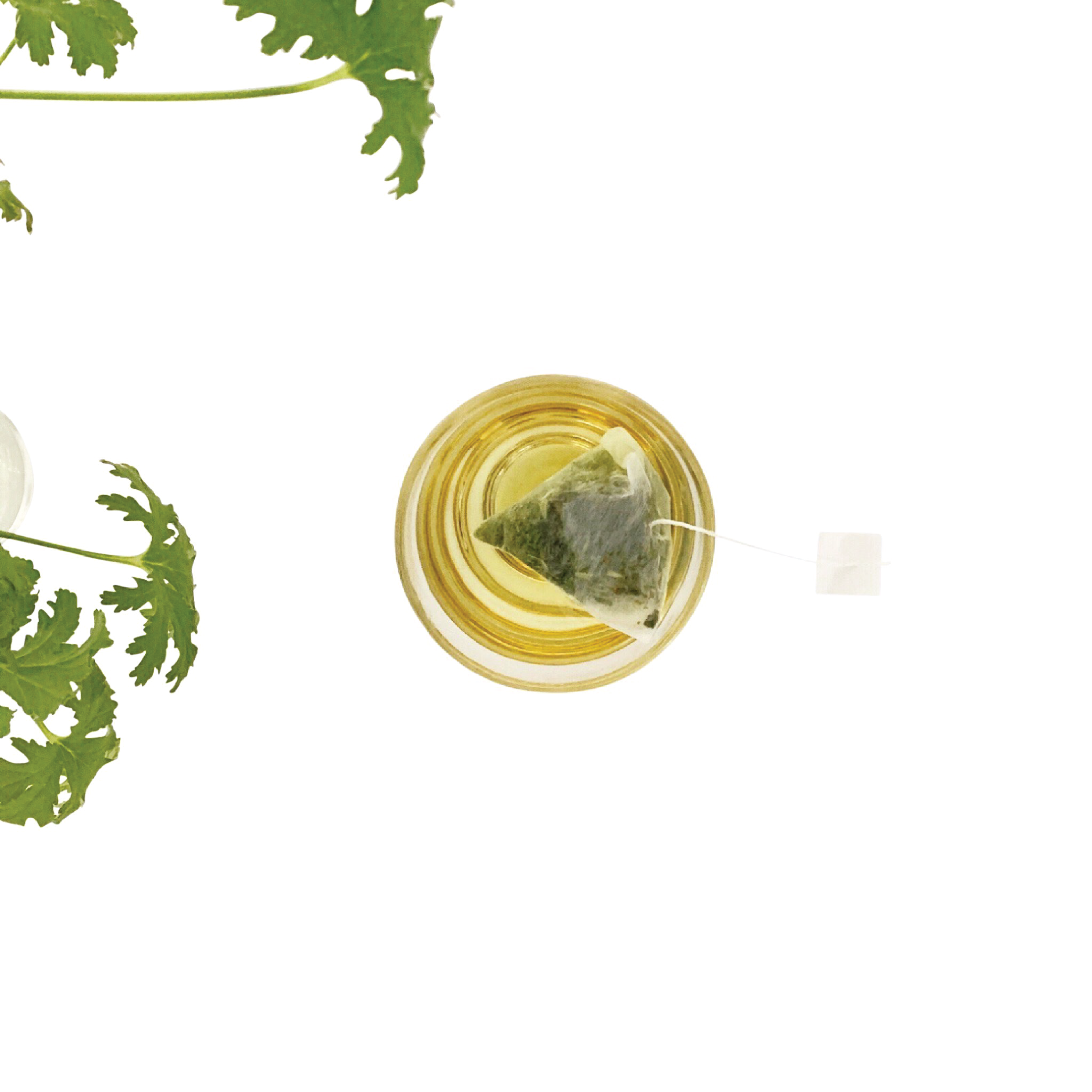 Photo of LEMONGRASS GREEN TEA BAGS