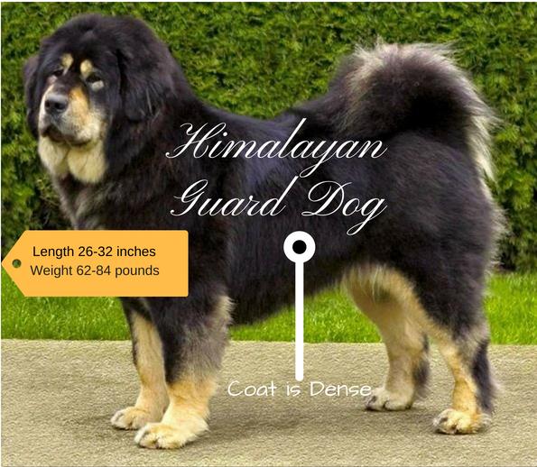 Himalayan Sheepdog Indian Dog Breeds Dogs Guard Dogs Dog Breeds