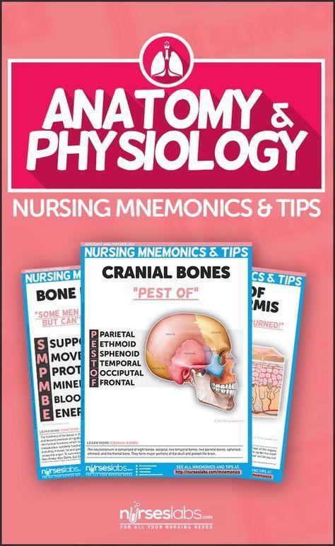 Anatomy and Physiology Nursing Mnemonics & Tips | Anatomy