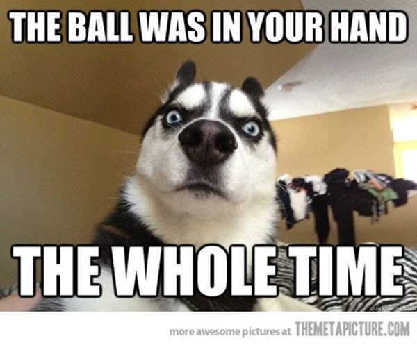 Meme Funny Husky Dogs : 40 pictures of cute and funny husky facial expressions funny husky
